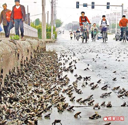 Exodus frog-earthquake-china_0